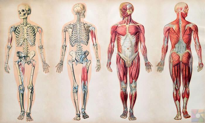 Vücut yenileme süresi nedir? İnsan vücudu yenilenme hızı nedir?