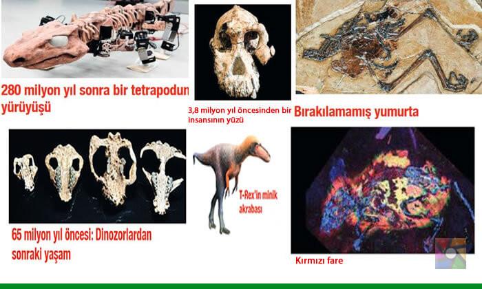Dünyanın en eski fosili hangisi?