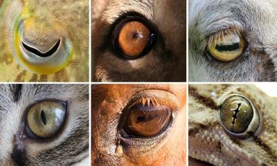Hayvanların neden göz bebekleri farklıdır?
