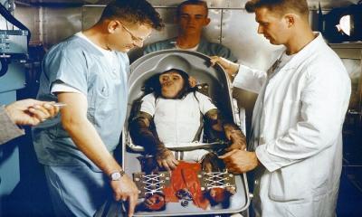Hangi hayvanlar uzaya gitti?