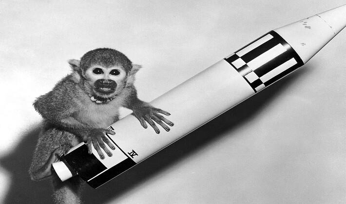 Miss Baker uzaya giden ve dönen sincap maymunu