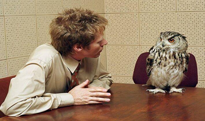 Baykuşlar akıllı kuşlar listesinde