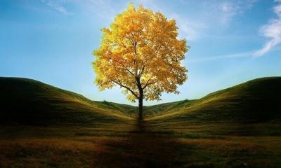 Hangi ağaçlar daha fazla serinlik verir?