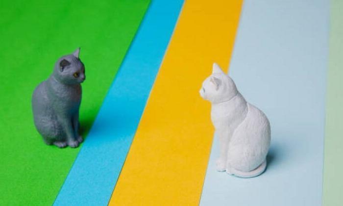 Hayvanlar aleminde sosyal mesafe kuralı yaygın olarak kullanılıyor