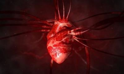 Kalbin yapısı neden bu kadar karışık?