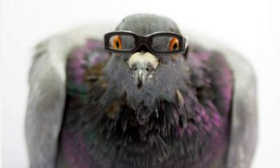 Kuş beyni tıpkı insanlardaki gibi nöro mimari yapıya sahip