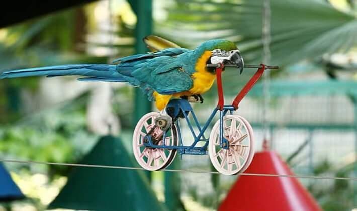 Papağanlar akıllı kuşlar listesinde