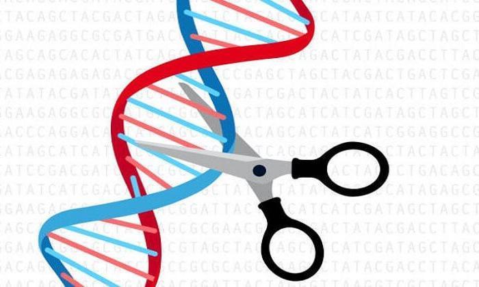 Zararlı hayvanların genleri değiştirilerek etkisizleştirilecek