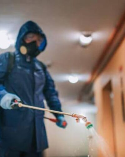 Haşerelerin zararları nelerdir? Böcek ilaçlama neden önemli?